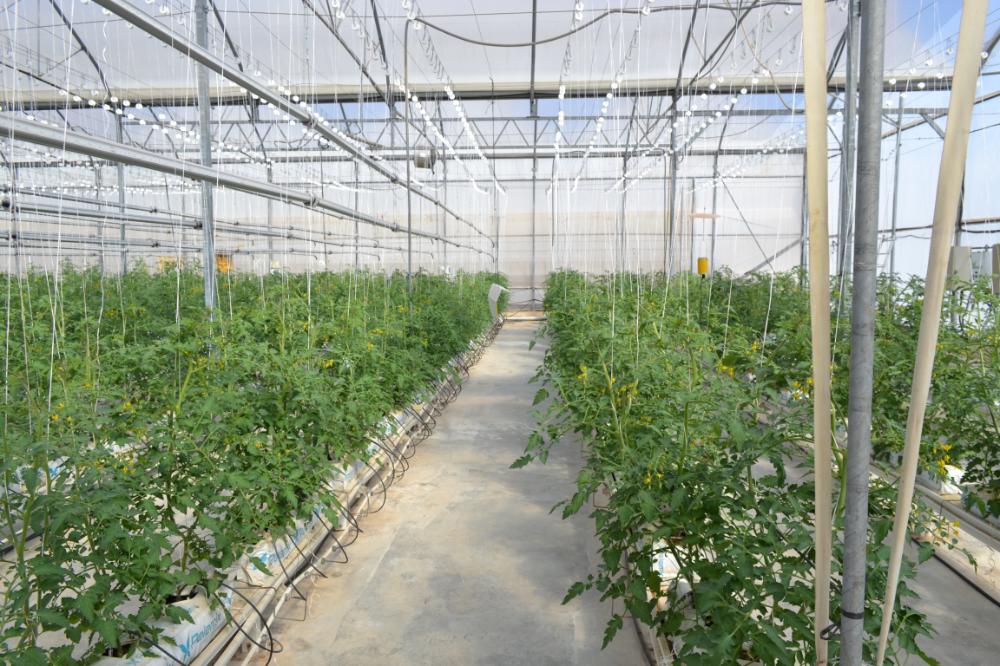 """invernadero ubicado en la Estación Experimental de Cajamar en """"Las Palmerillas"""""""